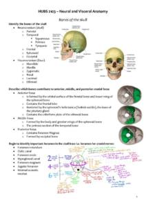 Neural and Visceral Anatomy (HUBS2103) full course summary